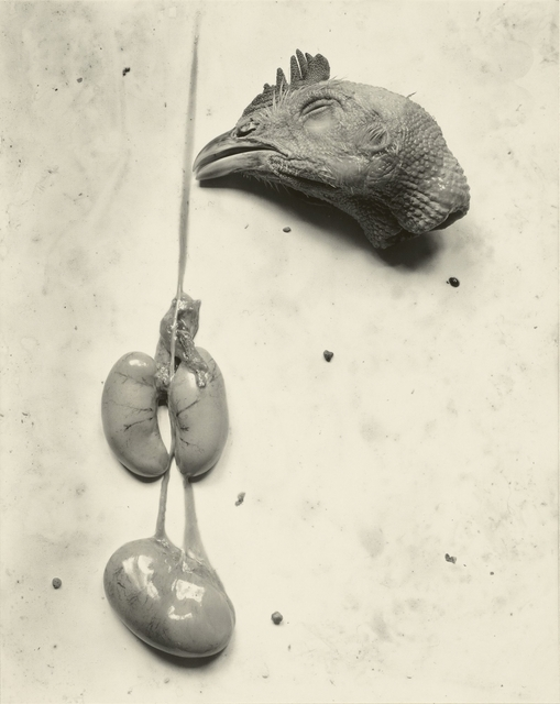 , 'Chicken,' 1939, J. Paul Getty Museum