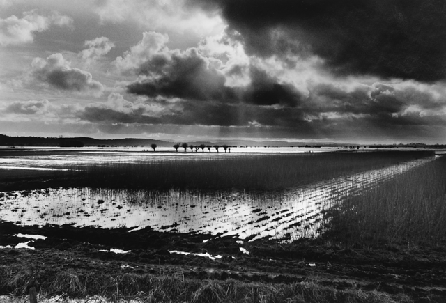 Don McCullin, 'Somerset Levels, Sedgemoor, England', ca. 1992, Howard Greenberg Gallery