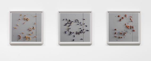 , 'Vanitas (Tulips) ,' 2012, Rhona Hoffman Gallery