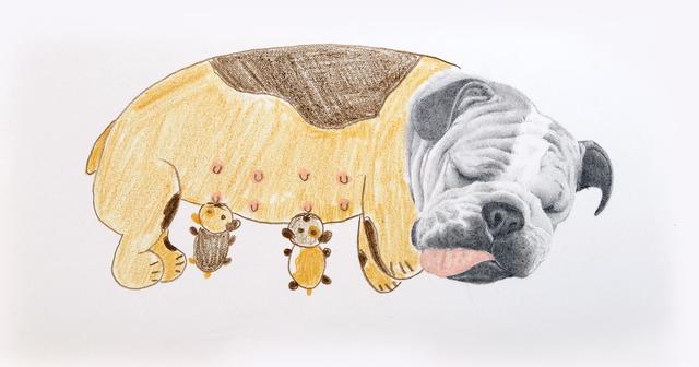 , 'Fiona y sus cachorros,' 2018, Galerie C.O.A