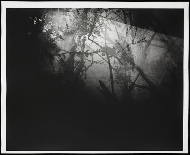 , 'Botanical Garden/Bronx Zoo XII,' 2015, Galleri Bo Bjerggaard