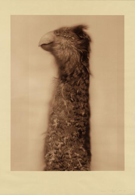 , 'Kakapo Ground Parrot (Sepia),' 2017, Gemini G.E.L.