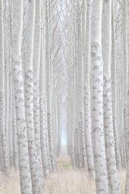 , 'Tree-Finity,' 2007, Untitled 2.0