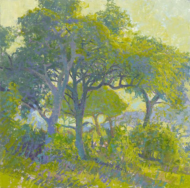 , 'Sunlit Trees outside Letaba, Kruger, South Africa,' 2017, John Martin Gallery
