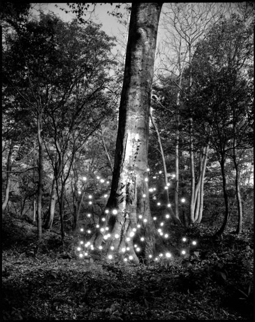 Tokihiro Sato, 'Shirakami #3', 2008, Haines Gallery