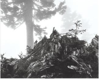 Tree, stump and mist, Northern Cascades, Washington