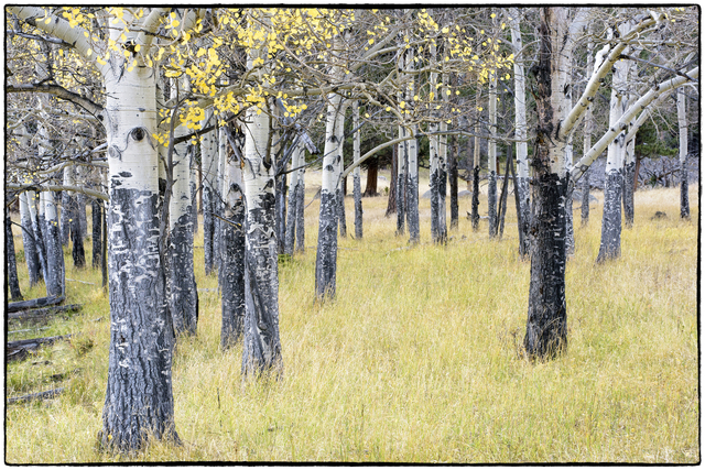 , 'Colorado Autumn Aspens #1,' , Merritt Gallery