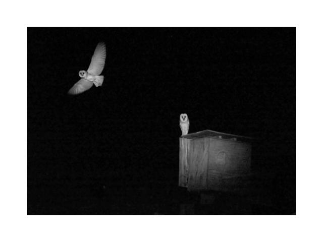 Kristi Lynn Tamcsin, 'Two Owls', 2017, Plasteel Frames & Gallery