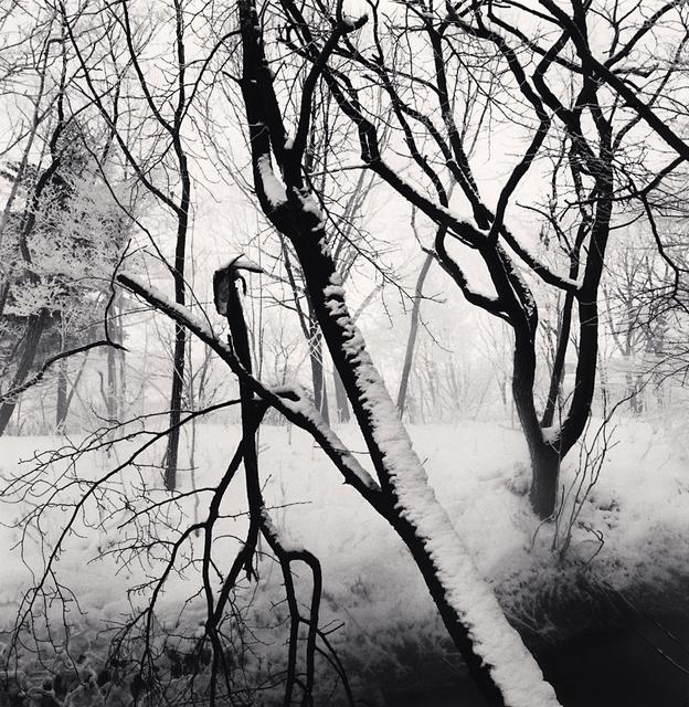 Michael Kenna, 'Kawayu Forest, Study 1, Hokkaido, Japan', 2014, G. Gibson Gallery
