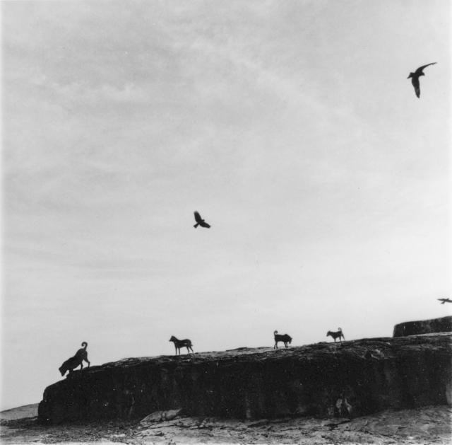 , 'Perros Perdidos, India,' 1998, ROSEGALLERY