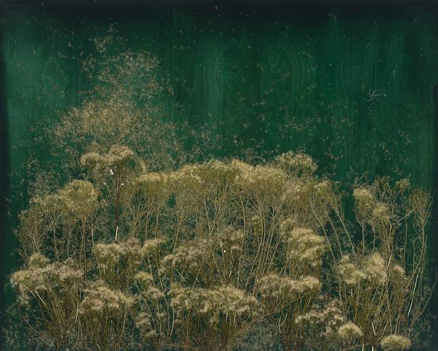 , 'In the Field of Spirit,' 2018, Lisa Sette Gallery