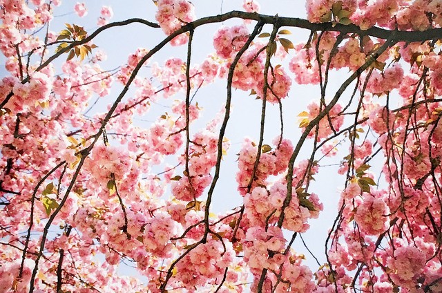 Susan Wides, 'Cherry Blossom 2', 2002, Madelyn Jordon Fine Art
