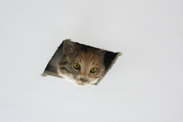 , 'Ceiling Cat,' 2016, Carroll / Fletcher