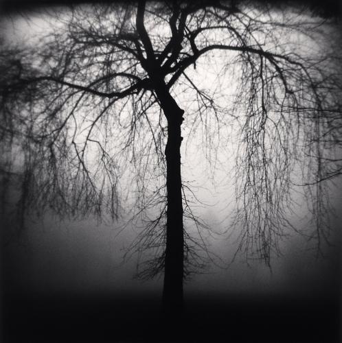 , 'Wilshire Park Tree, Portland, Oregon,' 2004, Dolby Chadwick Gallery