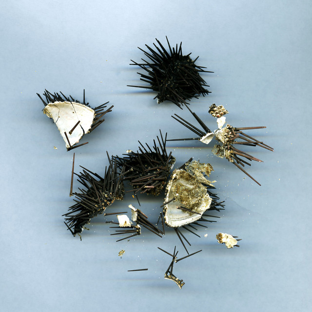 , 'Travel ephemera still life 741, Sea Urchin (Koufonissi, Greece),' 2011-2016, MASS MoCA