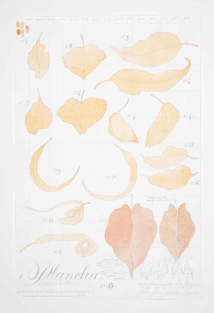 , 'No. 15 Plancha, Botanico, Herbario,' 2017, Casas Riegner
