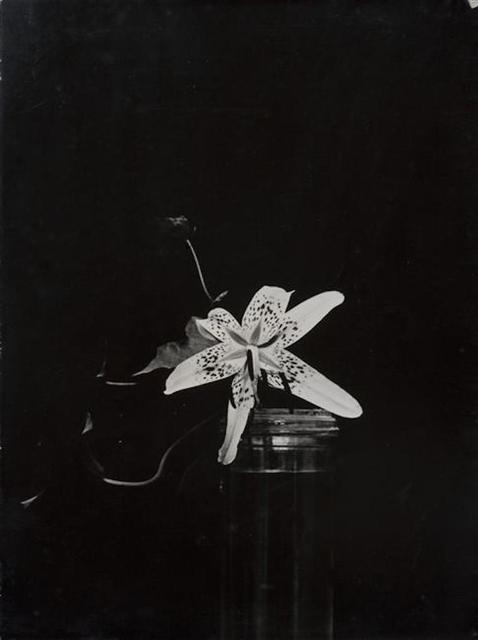 , 'Lily,' 1933, Grob Gallery