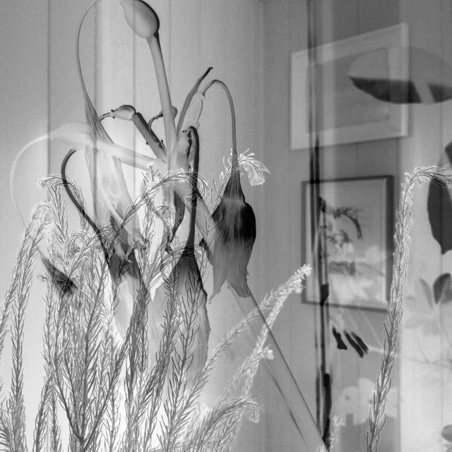 , 'Dead Lilies,' 2016, DENK Gallery