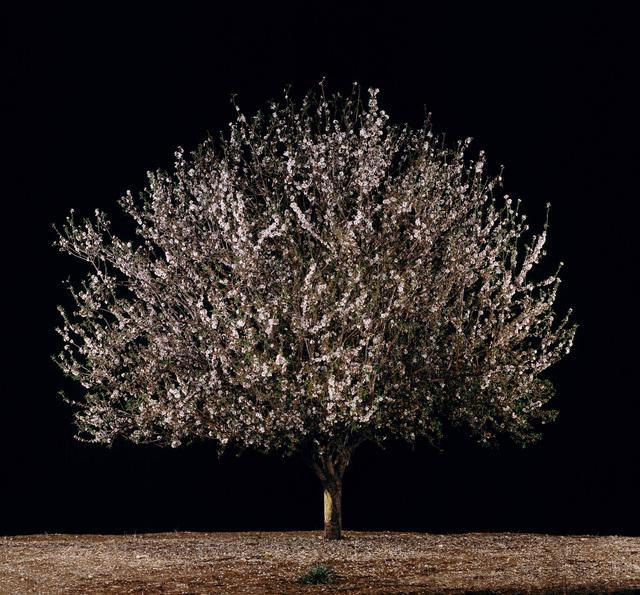 , 'Shaked (Almond),' 2011, Meislin Projects