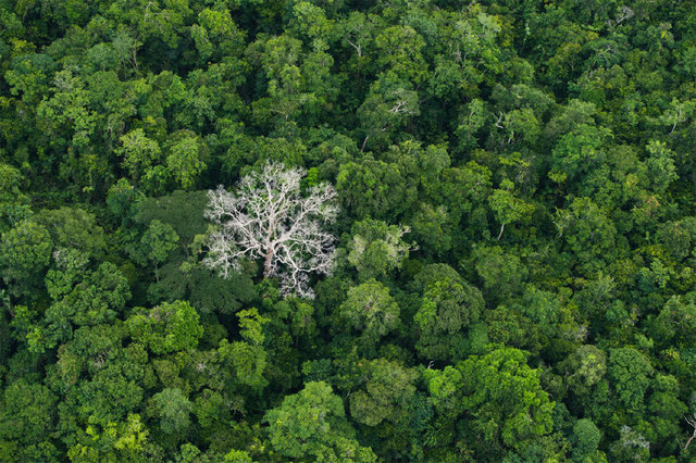 , 'Amazon solo defoliation (#204),' 2013, Catherine Edelman Gallery