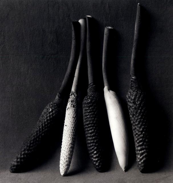 Flor Garduño, 'Pistils', 2000, Matthew Liu Fine Arts