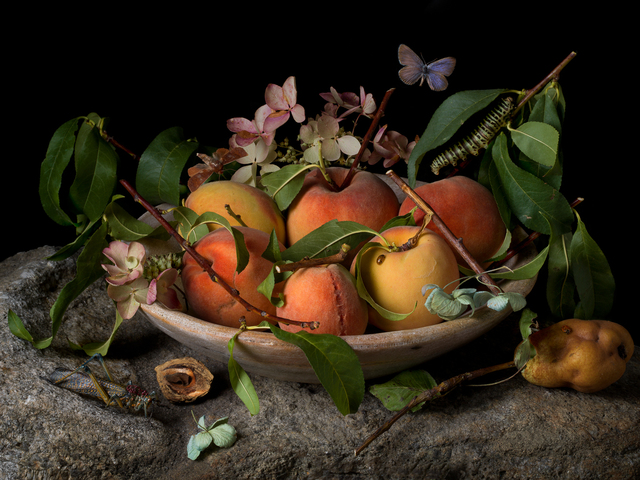 , 'Peaches and Hydrangeas, After GG,' 2015, Robert Klein Gallery