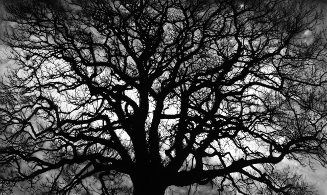 Robert Longo, 'Untitled (Tree)', 2018, Kenneth A. Friedman & Co.