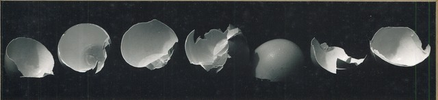 Ron Stark, 'Still Life with Box of Eggshells', 1972, Washington Color