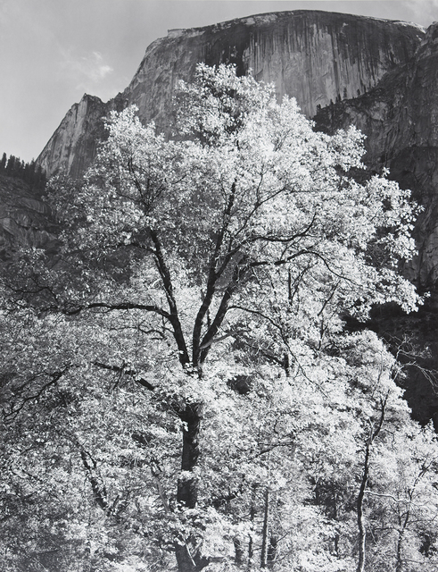 , 'Half Dome, Oak Tree, Autumn,' 1938, The Ansel Adams Gallery