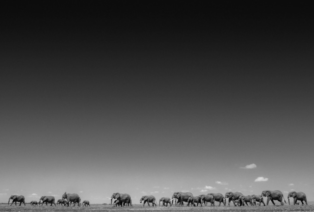 David Yarrow, 'Life on Earth', 2015, Maddox Gallery