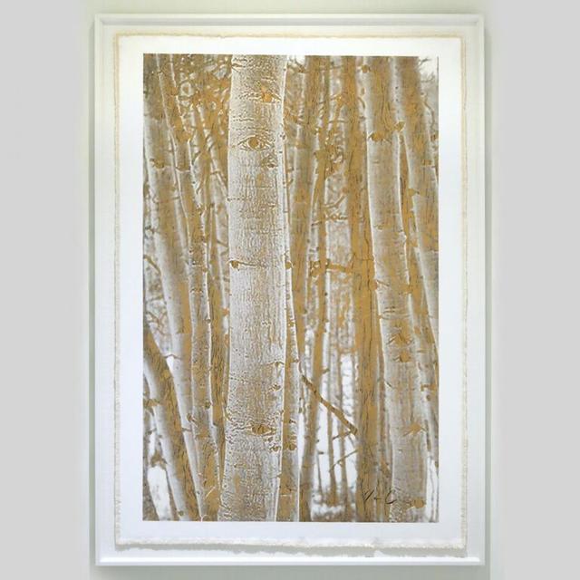 Bill Claps, 'Aspen Woodlands', Exhibit by Aberson