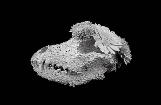 , 'Flower Funeral - Airedale- ,' 2018, SEIZAN Gallery