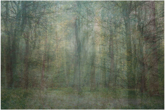 , 'Seven Years out of a Death Row Sentence (Forest),' 2009-2016, Mark Moore Fine Art