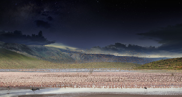 , 'Day to Night, Flamingos, Lake Bogoria, Kenya,' 2017, Bryce Wolkowitz Gallery