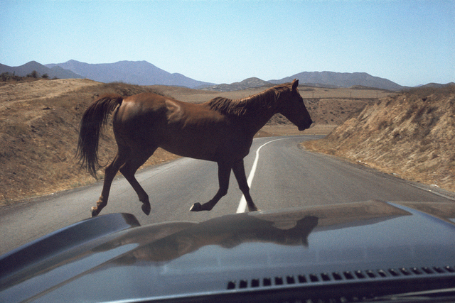 , 'Wild Horse Encounter, August,' 1978, Benrubi Gallery