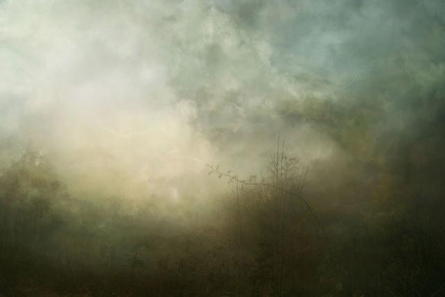 , 'Floora 12-01-3,' 2014, Galerie Michael Sturm