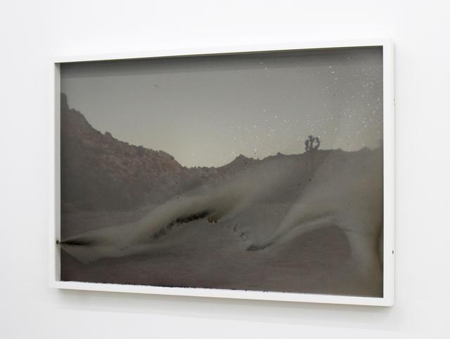 Cara Despain, 'Slow Burn (Joshua Tree)', 2016, Spinello Projects