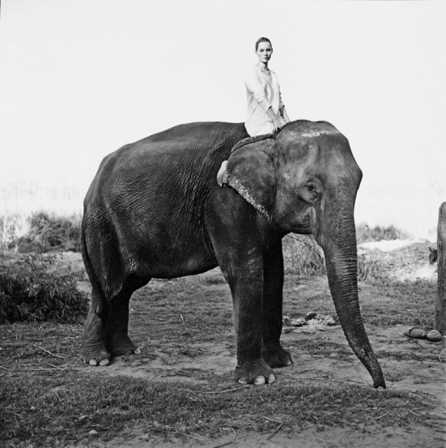 , 'Kate Moss on the Elephant, British Vogue,' 1993, Holden Luntz Gallery