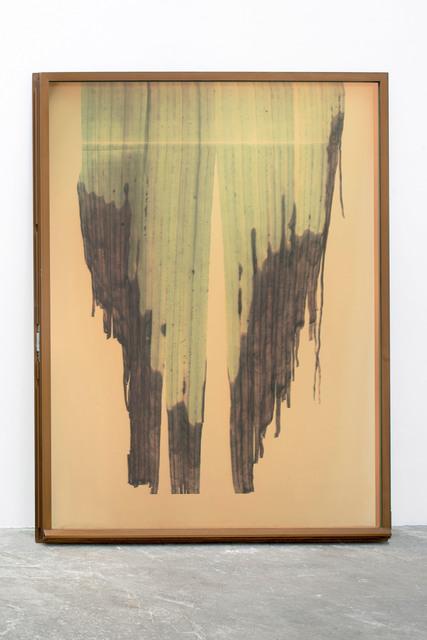 , 'Botanical Frottage (Rebecca),' 2013, PROYECTOSMONCLOVA
