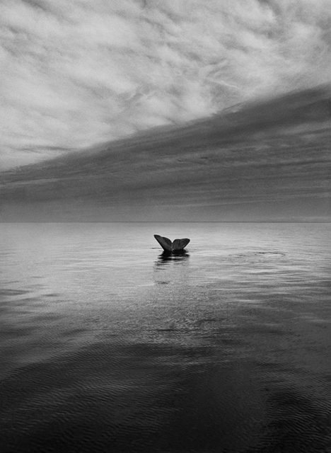 , 'Southern Right Whale Tail, Valdés Peninsula, Argentina,' 2004, Huxley-Parlour