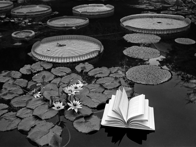 , 'Lecciones de botànica, Suiza, 1997,' 1998, Galerie Sophie Scheidecker