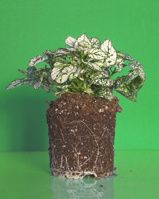 , 'Plant ,' 2015, MKG127