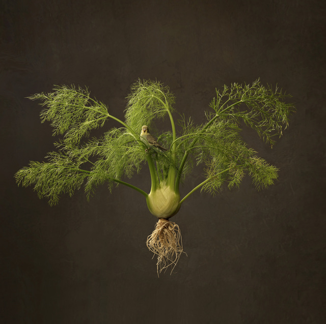 , 'Fennel and Bird,' 2016, SmithDavidson Gallery