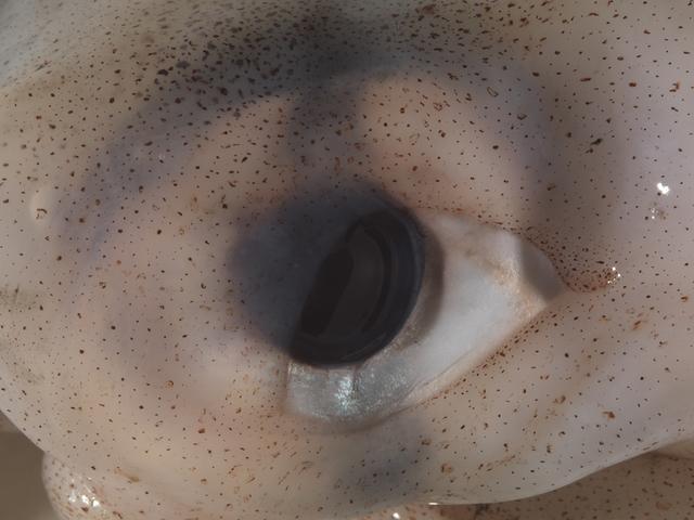 , 'Eye #2,' 2016, Federico Luger
