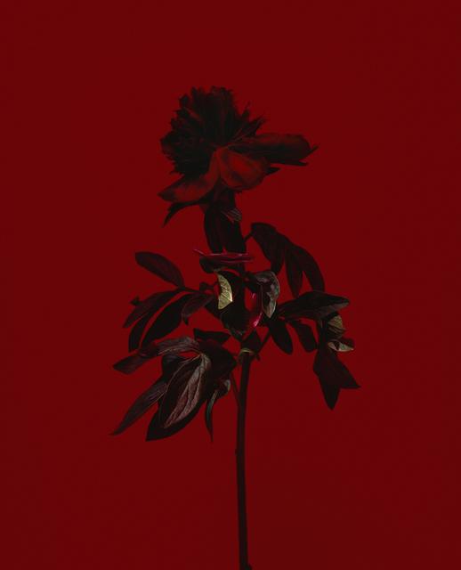 , 'fig. XXXI,' 2017, Galerie SOON