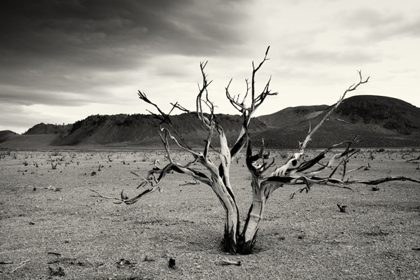 Cara Weston, 'Burnt Bush, Mono Lake', Weston Gallery