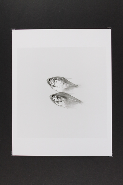 , 'Gold Fish,' 2014, Gallery LVS