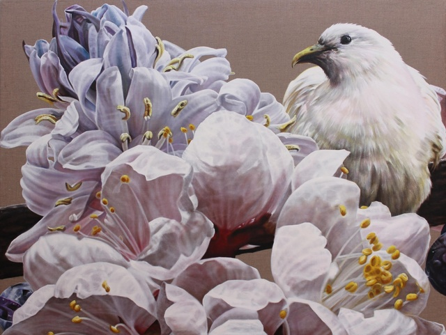 , 'The gentle messenger: Pied Imperial Pigeon,' 2014, Rebecca Hossack Art Gallery