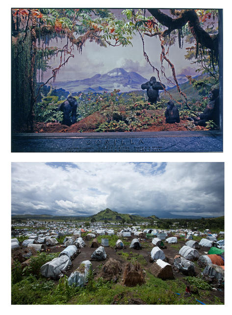 , 'Mountain gorilla diorama, Kivu Moutains: Akeley Hall of African Mammals, American Museum of Natural History, New York. & Camp for war refugees, Bulengo, Goma, 2013. Sammy Baloji.,' 2013, Axis Gallery