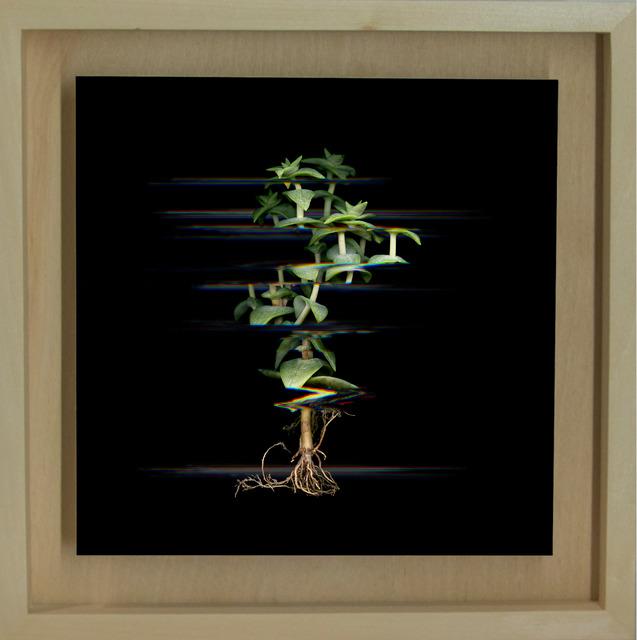 Márk Martinkó, 'Digitized Plants No.15', 2014, MyMuseum